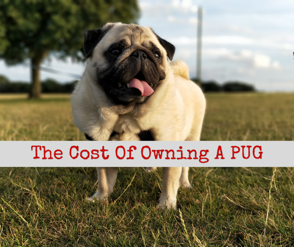 cost of a pug
